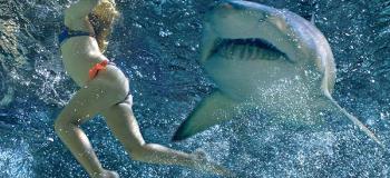 Les meilleurs lieux pour plonger avec des requins