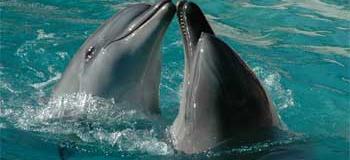 A faire – Nager avec les dauphins