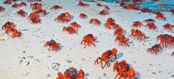 A faire : Assister à la marche des crabes rouges